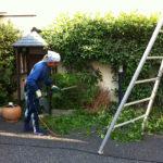 東京都新宿区植木剪定
